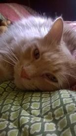 Catlover165