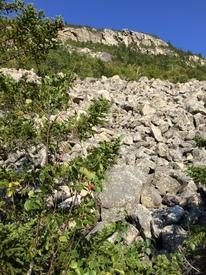 ClimbingOwl27