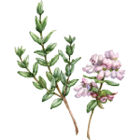 About_Thyme