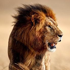 Lionfire982