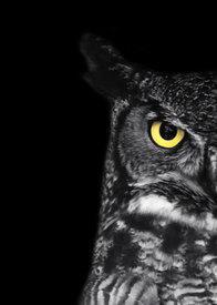 night_owls1985