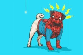 Spiderpug