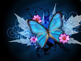 butterflyemerging2014