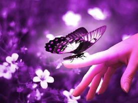 papillon44