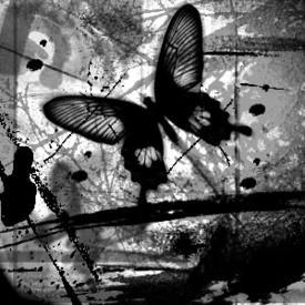 butterflydiva