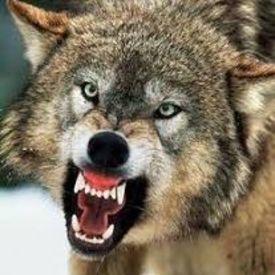 wolfruhn