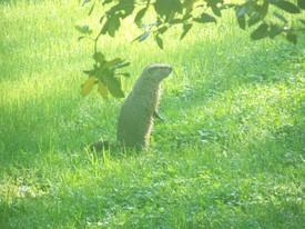 sallygroundhog