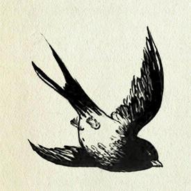 sparrow747