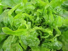 saladcrunchy