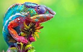 Chameleon80