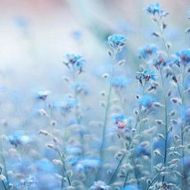 FlowerBlue00