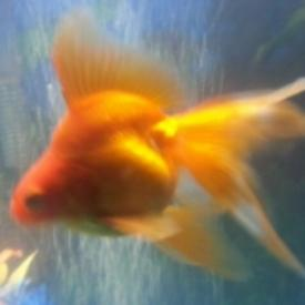goldfishgoo
