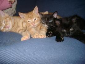 kitten0puppy
